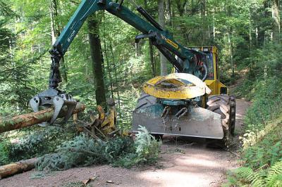 Waldservice, Baumfällarbeiten, Aufräumarbeiten, Entastung