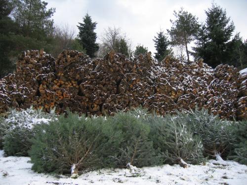 Christbäume und Holz
