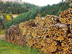 Brennholz aus der Region