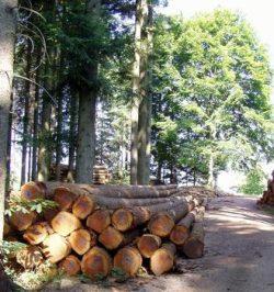 Stammholz aus nachhaltiger Forstwirtschaft aus deutschem Wald